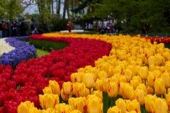 Keukenhof park w holandiach Fotografia Stock