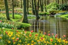 Keukenhof tijdens tulpenseizoen holland Royalty-vrije Stock Fotografie