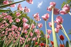 Keukenhof trädgård i Holland Arkivbilder