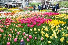 KEUKENHOF-TRÄDGÅRD, NEDERLÄNDERNA - APRIL 08: Inom Willem-Alexander Pavillion Keukenhof är världens den största blommaträdgården  Royaltyfri Fotografi