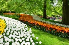 Keukenhof trädgård, Nederländerna Färgrika blommor och blomningen i holländsk vår arbeta i trädgården Keukenhof Fotografering för Bildbyråer