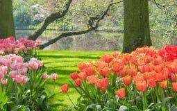 Keukenhof trädgårdar Tulip Pond royaltyfria bilder