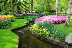 Keukenhof trädgård, Nederländerna - Maj 10: P Färgrika blommor och blomningen i holländsk vår arbeta i trädgården Keukenhof som ä Fotografering för Bildbyråer
