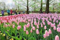 KEUKENHOF TUIN, NEDERLAND - APRIL 08: Keukenhof is de grootste de bloemtuin van de wereld met 7 miljoen bloembollen op een gebied Stock Foto
