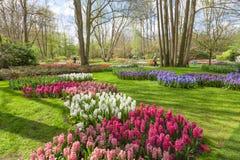 Keukenhof Tulip Garden em Países Baixos Imagem de Stock