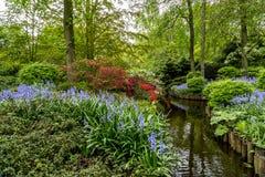 Keukenhof Tulip Gardens Royaltyfria Bilder