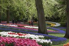 Keukenhof-Tulpengärten und schöne grüne Bäume Stockfotografie
