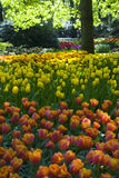 Keukenhof2008 Royalty Free Stock Photo