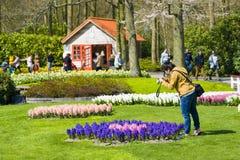 Keukenhofblommaträdgården Royaltyfri Bild