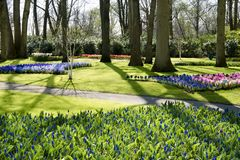 Keukenhofpark, de eerste ochtendzon in Keukenhof-Park - bloeiende kleurrijke hyacinten in Keukenhof-Park Stock Afbeelding