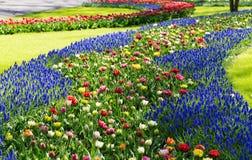 Keukenhofpark in Holland Royalty-vrije Stock Fotografie