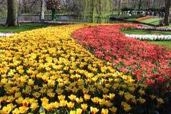 Keukenhofpark in Nederland Stock Foto's