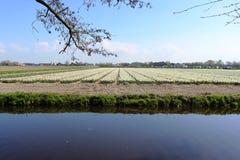 Keukenhofpark in Nederland Royalty-vrije Stock Afbeelding