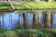 Keukenhofpark in Nederland Royalty-vrije Stock Foto