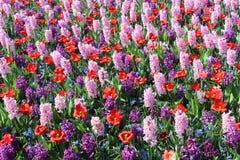 Keukenhofpark in Nederland Stock Fotografie