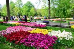 Keukenhoftuin, Nederland Kleurrijke bloemen en bloesem in Nederlandse de lentetuin Keukenhof Royalty-vrije Stock Afbeelding