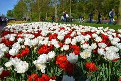 Keukenhoftuinen met tulpenbloemen stock foto