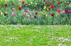 Keukonhof Holland tulipan Obraz Stock