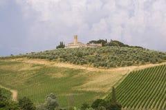 Keurige Toscaanse wijnstokken royalty-vrije stock foto