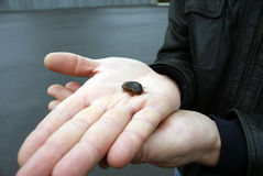 Kever op de menselijke hand, natuurbeschermingonderwerp Royalty-vrije Stock Afbeeldingen