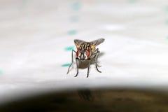 Kevers, spinnen, insecten Royalty-vrije Stock Afbeeldingen