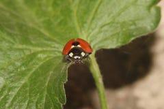 Kevers, spinnen, insecten Stock Afbeelding