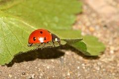 Kevers, spinnen, insecten Stock Afbeeldingen