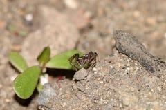 Kevers, spinnen, insecten Royalty-vrije Stock Foto