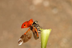 Kevers, spinnen, insecten Royalty-vrije Stock Afbeelding