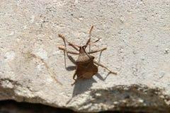 Kevers, spinnen, insecten Stock Fotografie