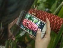 Kew庭院的,一朵桃红色花热带植物 库存图片