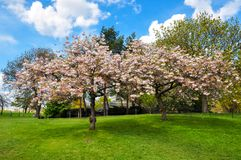 Kew植物园在春天,伦敦,英国 免版税库存图片