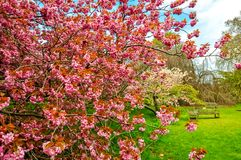 基奥植物园在春天,伦敦,英国 库存图片
