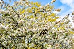 Kew botanisk trädgård i våren, London, Förenade kungariket arkivbilder