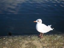 Kew Garden in London Morning. Kew Garden bird in Morning London Royalty Free Stock Images