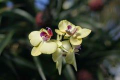 Kew Gardens' świętowanie orchidea fotografia royalty free