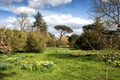 Kew gardens in London on the spring Royalty Free Stock Image