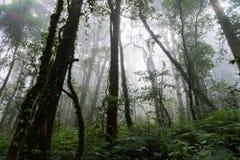 Kew Mae Pan Nature Trail. Chiang mai, Thailand Royalty Free Stock Photos