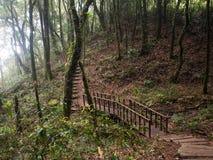 Kew Mae Pan Nature Trail en el parque nacional de Doi Inthanon, Tailandia Imagen de archivo libre de regalías