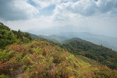 Kew Mae Pan, Waterfall in hill evergreen forest of Doi Inthanon Stock Photography