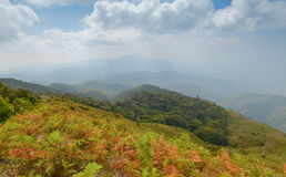 Kew Mae Pan, Waterfall in hill evergreen forest of Doi Inthanon Royalty Free Stock Image