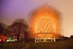 Kew ogródów pszczoły rój przy nocą Obrazy Royalty Free