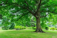 Kew ogródy, Anglia zdjęcia royalty free