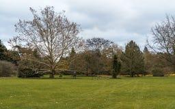 Kew ogródy w zimie, jesieni/ obraz stock