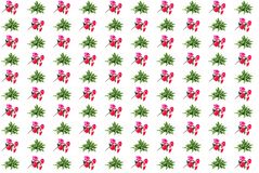 Kewensis di Kalanchoe Laciniata e fiori artificiali rossi Fotografie Stock Libere da Diritti