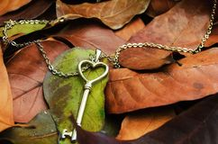Key on the autumn leafs. Key-shaped necklace on the autumn leafs Royalty Free Stock Photography
