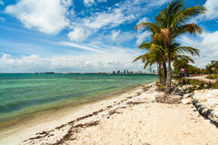 Key Biscayne Beach Stock Images