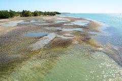 KEY BISCAYNE, FL, ETATS-UNIS - 17 AVRIL 2018 : Remplaçants d'île de Virginia Key images stock