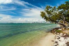 Key Biscayne strand fotografering för bildbyråer