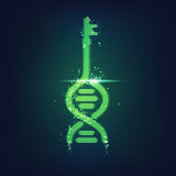 Key DNA. Icon of key dna, dna shape combined with key, concept of biometric technology Stock Image